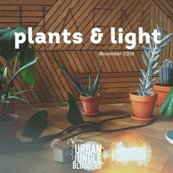 December 2016: Plants & Light