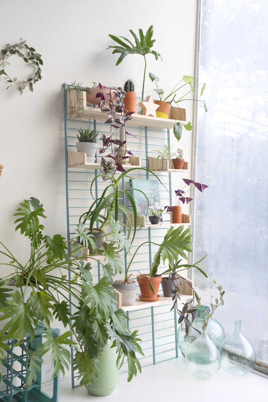 Urban Jungle Bloggers - Fency Tolhuijs plantshelfie