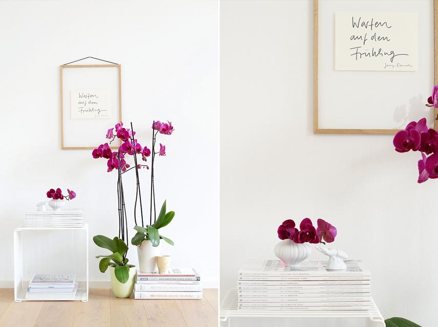 Urban Jungle Bloggers - Bloomifique Anthura Stellenbosch orchids