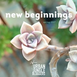 Urban Jungle Bloggers Spring 2017: New Beginnings