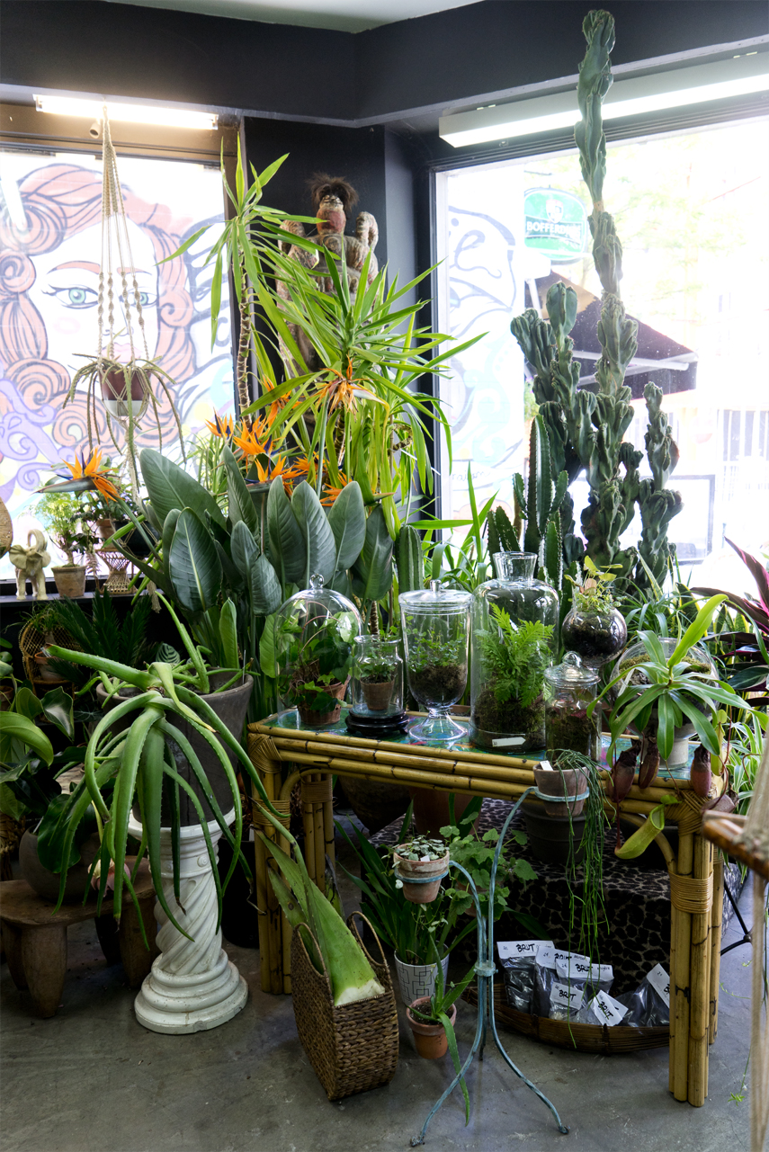 Brut Plant Shop In Brussels