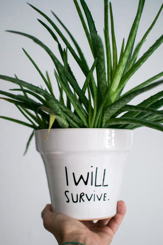 Urban Jungle Bloggers - I will survive