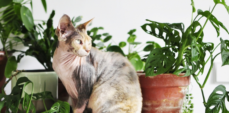 Urban Jungle Bloggers Living Successfully with cats and plants