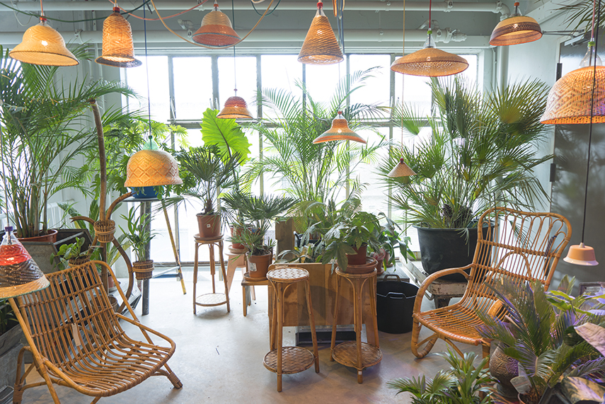 Trend Urban Jungle : Plant trends from dutch design week 2017