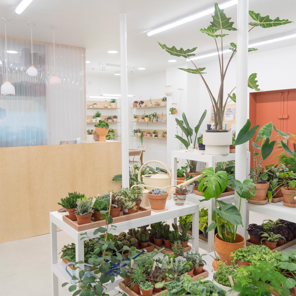 Urban Jungle Bloggers Leaf Plant Shop in Paris #urbanjunglebloggers #plantshop #paris