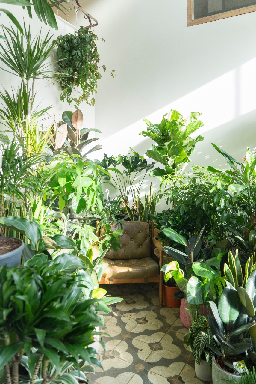 Urban Jungle Bloggers - Conservatory Archives in London #urbanjunglebloggers