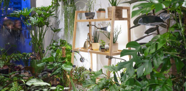 Urban Jungle Bloggers - Little Green Stories plant shop Ghent #urbanjunglebloggers #plantshop