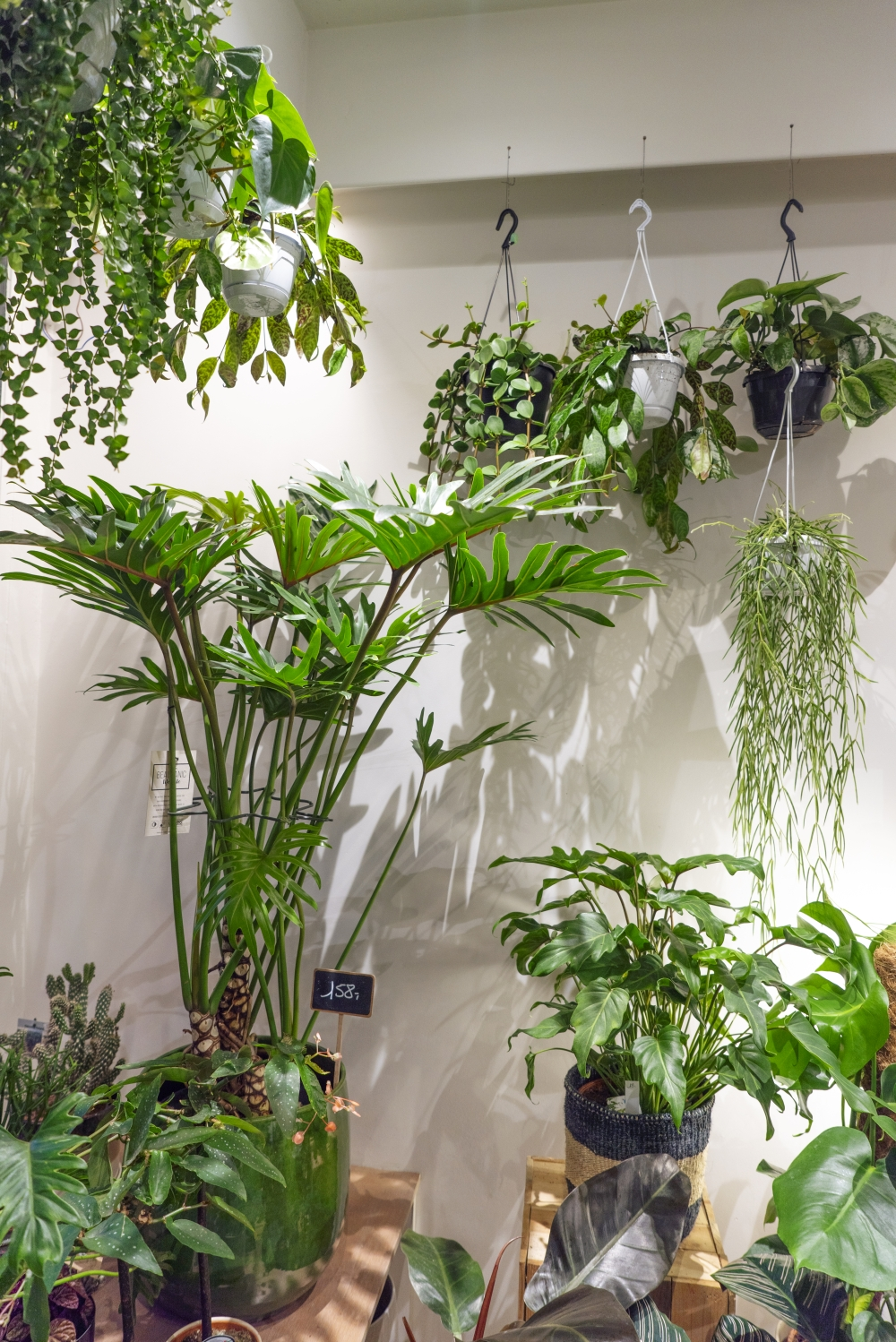 Urban Jungle Bloggers - Little Green Stories plant shop Ghent #urbanjunglebloggers #plantshop