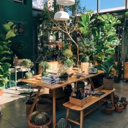 Urban Jungle Bloggers - Flo Atelier Botânico in São Paulo