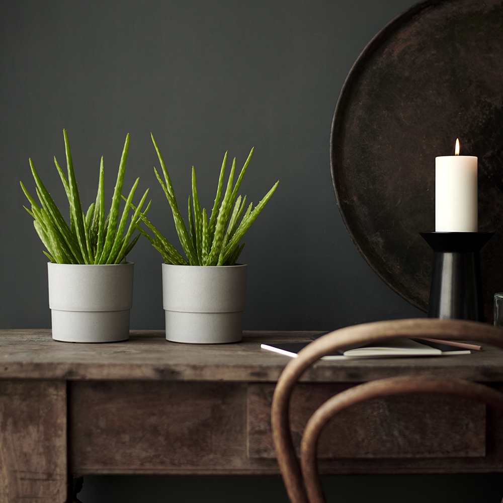 Urban Jungle Bloggers - Green Gift Guide 2019 - IKEA NYPON Aloe Vera #urbanjunglebloggers