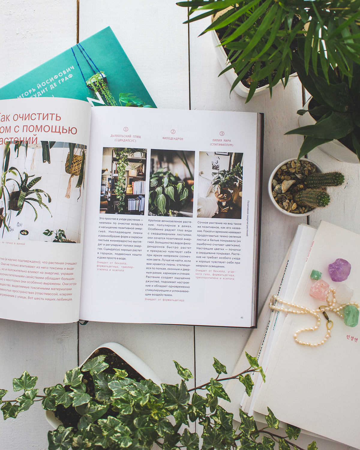 Plant Tribe book in Russian Ok Jungle by Urban Jungle Bloggers