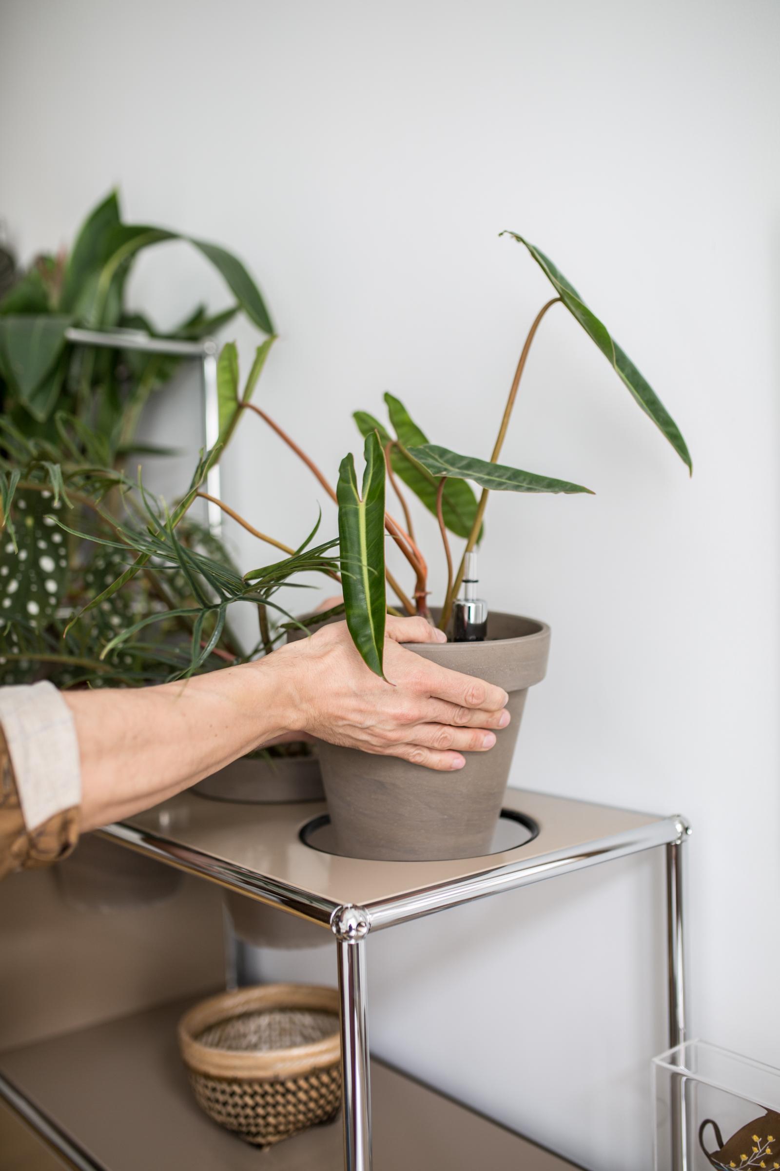 USM Haller, World of Plants, Home Story, Berlin, plant shelves