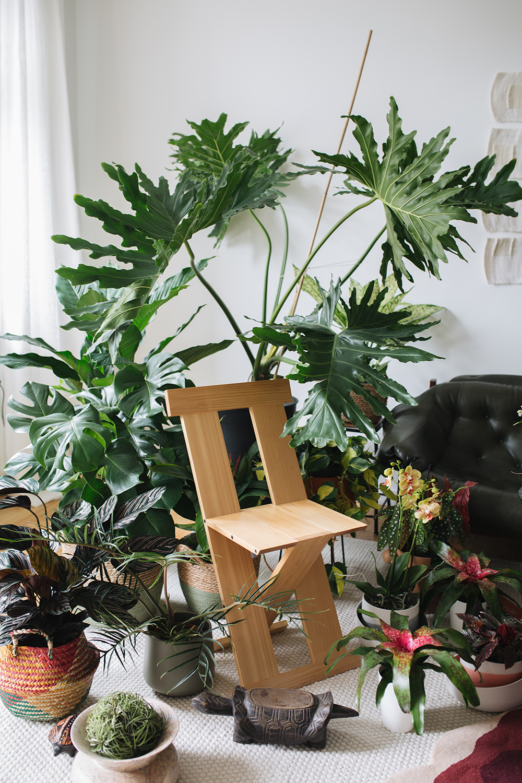 Urban Jungle Bloggers - Houseplant Travel to Brazil #urbanjunglebloggers